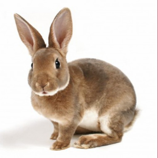 German Word of the Day - rabbit (noun)