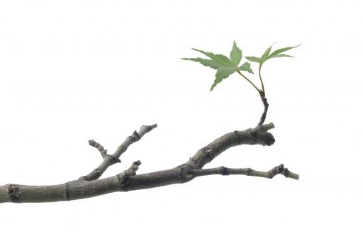 Spanish word of the day branch noun - Ramas de arboles ...